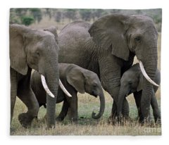 African Elephant Females And Calves Fleece Blanket