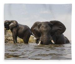 African Elephants In The Chobe River Fleece Blanket