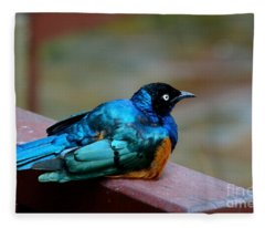 African Superb Starling Bird Rests On Wooden Beam Fleece Blanket