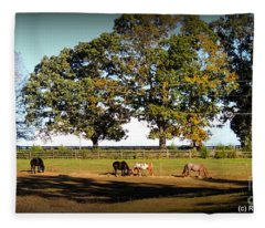 Afternoon In The Sun At Blue Horse Rescue Fleece Blanket
