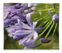 Agapanthus Flower Close-up Fleece Blanket