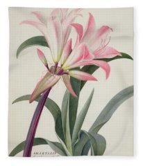 Amaryllis Belladonna, 1761 Fleece Blanket