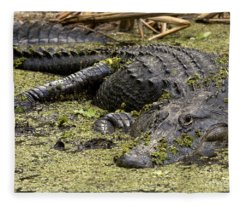 American Alligator Smile Fleece Blanket