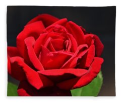 American Beauty Red Rose Fleece Blanket