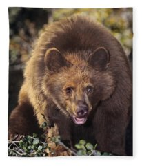American Black Bear In Tree Wildlife Rescue Fleece Blanket