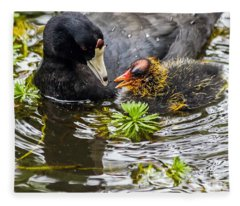 American Coot And Chick Fleece Blanket