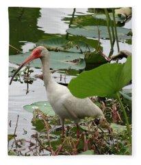 American White Ibis In Brazos Bend Fleece Blanket