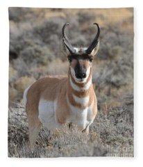 ...and The Antelope Play Fleece Blanket