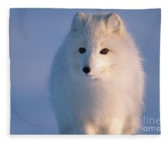 Arctic Fox North Slope Alaska Fleece Blanket