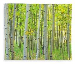 Aspen Tree Forest Autumn Time  Fleece Blanket