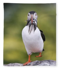 Atlantic Puffin Carrying Greater Sand Fleece Blanket