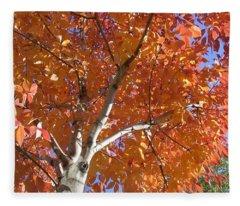 Autumn Aspen Fleece Blanket