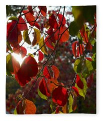 Autumn Dogwood In Evening Light Fleece Blanket
