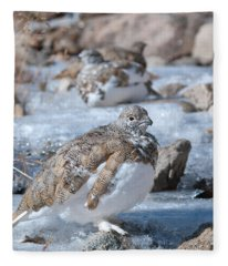Autumn Plumage White-tailed Ptarmigan Fleece Blanket