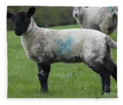 Baby Black And White Lamb Fleece Blanket