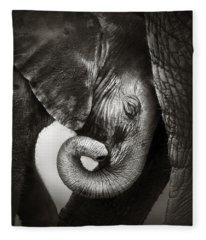 Baby Elephant Seeking Comfort Fleece Blanket