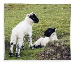 Baby Sheep Fleece Blanket