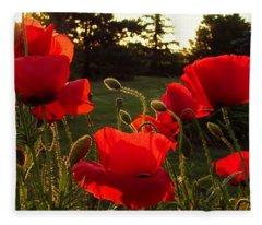 Backlit Red Poppies Fleece Blanket