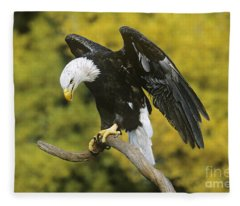 Bald Eagle In Perch Wildlife Rescue Fleece Blanket