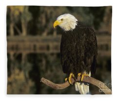 Bald Eagle On Dead Snag Wildlife Rescue Fleece Blanket