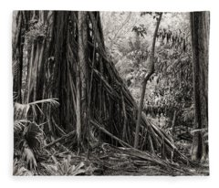 Strangler Fig And Cypress Tree Fleece Blanket