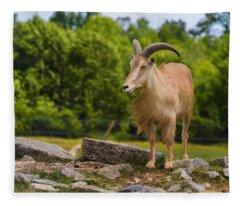 Barbary Sheep Fleece Blanket