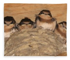 Barn Swallow Chicks 2 Fleece Blanket