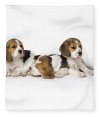 Beagle Puppies, Row Of Three, Second Fleece Blanket