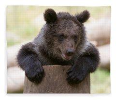 Bear Cub Fleece Blanket