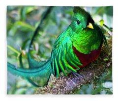 Beautiful Quetzal 4 Fleece Blanket