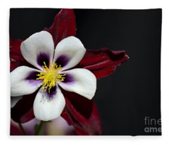 Beautiful White Petal Yellow Stamen Purple Shades Aquilegia Columbine Flower Fleece Blanket