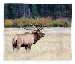 Big Colorado Bull Fleece Blanket