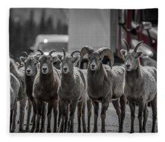 Big Horn Sheep Road Block Fleece Blanket