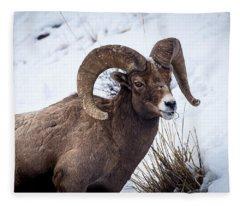 Bighorn Ram Fleece Blanket