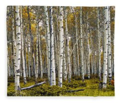 Aspen Trees In Autumn Fleece Blanket