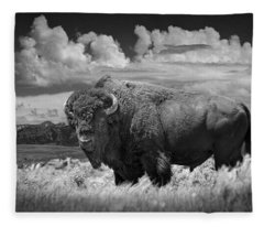Black And White Photograph Of An American Buffalo Fleece Blanket