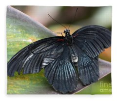 Black Butterfly Fleece Blanket