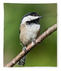 Black Capped Chickadee Fleece Blanket
