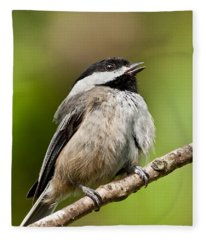 Black Capped Chickadee Singing Fleece Blanket