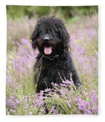 Labradoodle Photographs Fleece Blankets