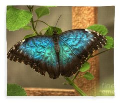 Blue And Black Butterfly Fleece Blanket