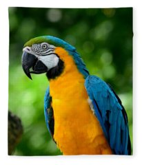 Blue And Yellow Gold Macaw Parrot Fleece Blanket