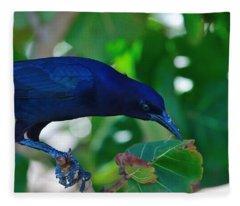 Blue-black Black Bird Fleece Blanket