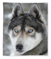 Blue Eyes Husky Dog Fleece Blanket