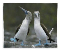 Blue Footed Booby Dancing Fleece Blanket