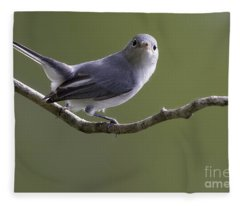 Blue-gray Gnatcatcher Fleece Blanket