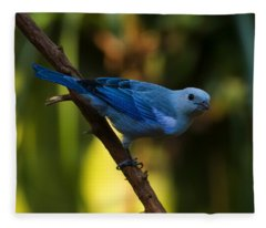 Blue Grey Tanager Fleece Blanket