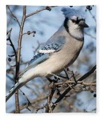 Blue Jay.. Fleece Blanket