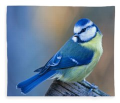 Blue Tit Looking Behind Fleece Blanket
