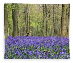 Bluebells Surrey England Uk Fleece Blanket